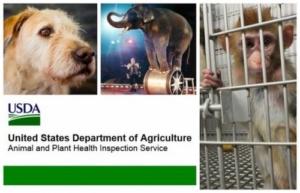 L'amministrazione Trump oscura i dati sugli abusi sugli animali (fonte: aphis.usda.gov)