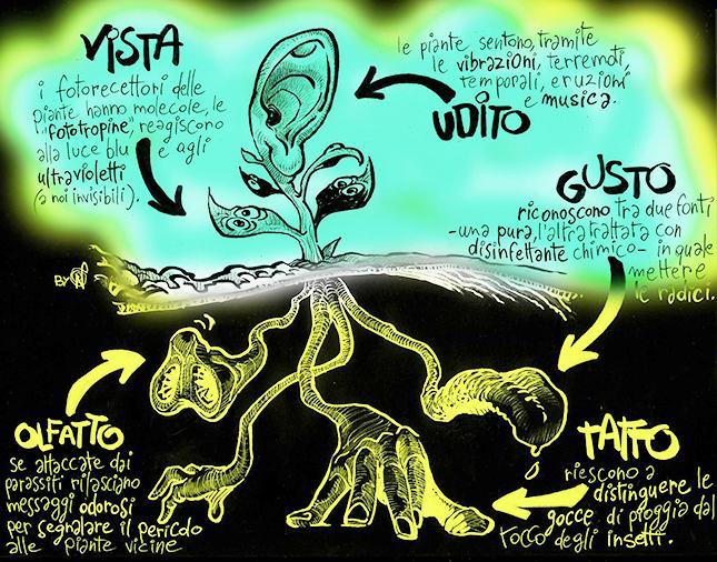 I sensi delle piante