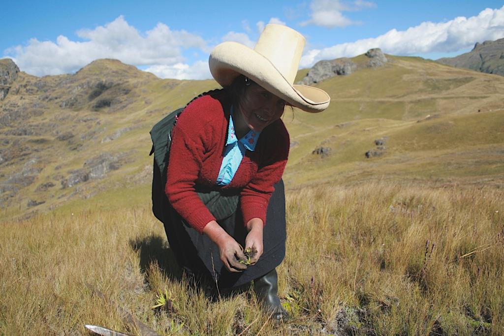 Fotografie del progetto Aguas de Oro