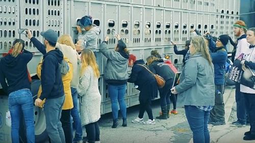 Le immagini degli attivisti nel videoclip di A Simple Love