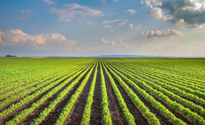 agricoltura-intensiva