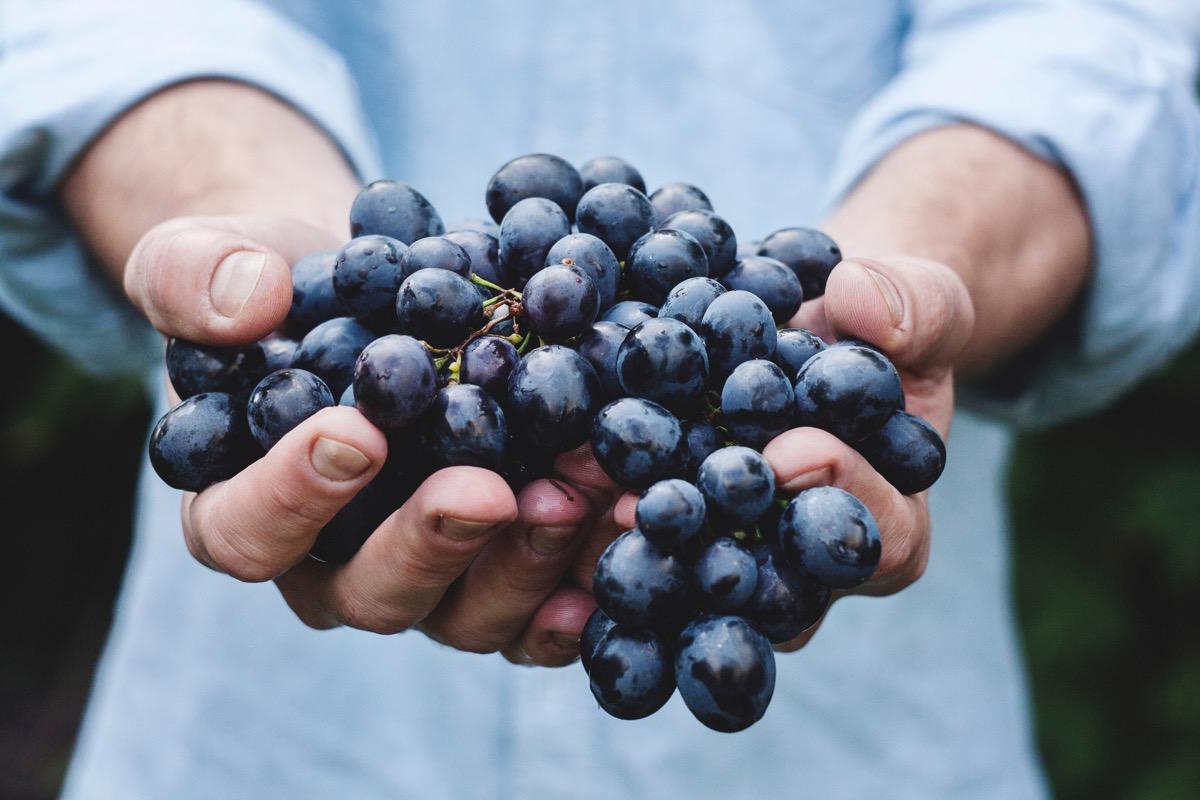 Daniela Ducato uva