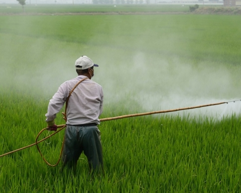 pesticida foto campo