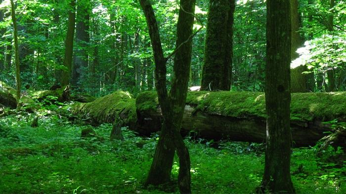 Foresta di Bialowieza - Foto di Erik de Haan