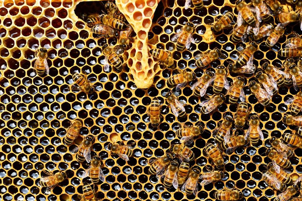api domestiche