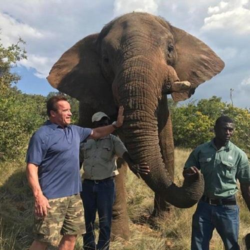 """Una foto postata recentemente da Schwarzenegger. """"Chi diavolo può uccidere queste creature meravigliose per l'avorio?"""", ha scritto l'attore."""