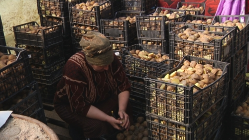 Una contadina che prepara le patate per la semina