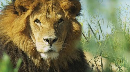 Lion Ark - Tim Phillips