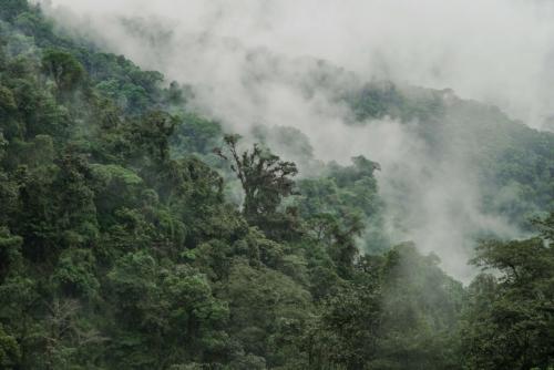Il suono dell'Amazzonia a CinemAmbiente