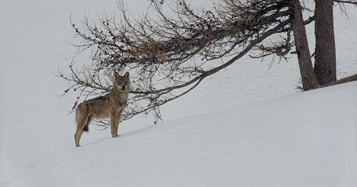 La-vallée-des-loups-3