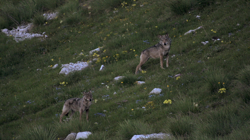 La-vallée-des-loups-4