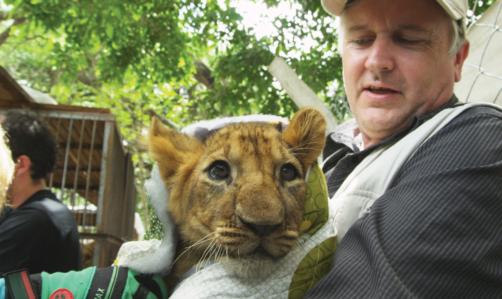 Lion Ark: il regista Tim Phillips ha preso parte alle operazioni di salvataggio condotte da ADI.
