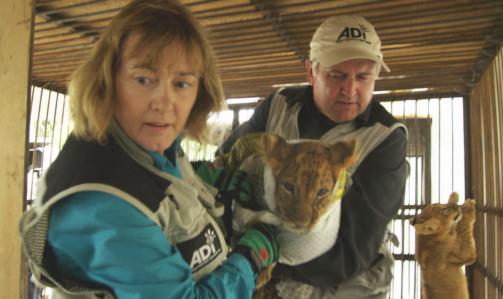 Lion Ark: il regista Tim Phillips con Jan Creamer, presidente di ADI.