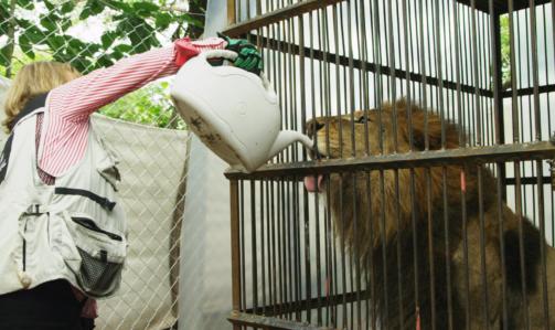 """Lion Ark: tra i """"no"""" al circo con animali spiccano le motivazioni di carattere etologico."""