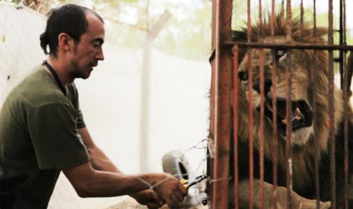 Lion Ark: in Bolivia e in molti Stati del Sud America, la realtà dei circhi con animali è solo un ricordo.
