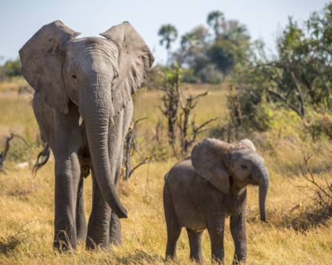 Naledi A Baby Elephant's Tale