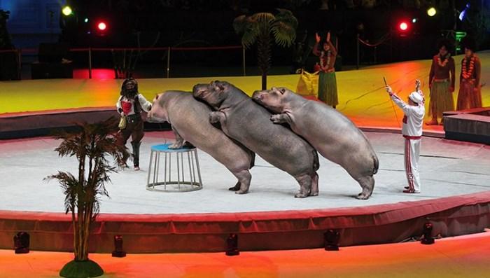 La Fnovi con LAV per circo libero dagli animali (fonte: lav.it)