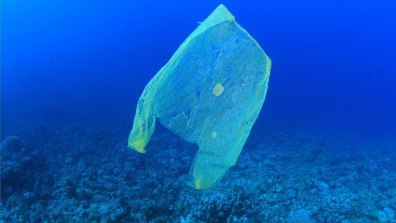 Una busta di plastica in mezzo al mare
