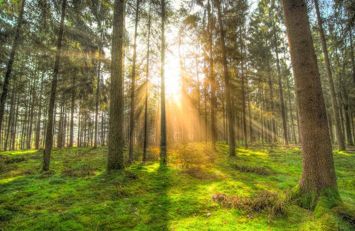 foresta Giornata Mondiale dell'Ambiente