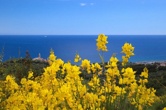 riviera-dei-fiori.jpg
