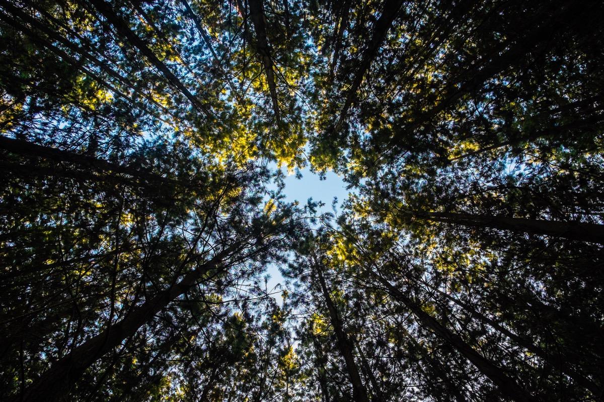 shirnrin yoku alberi