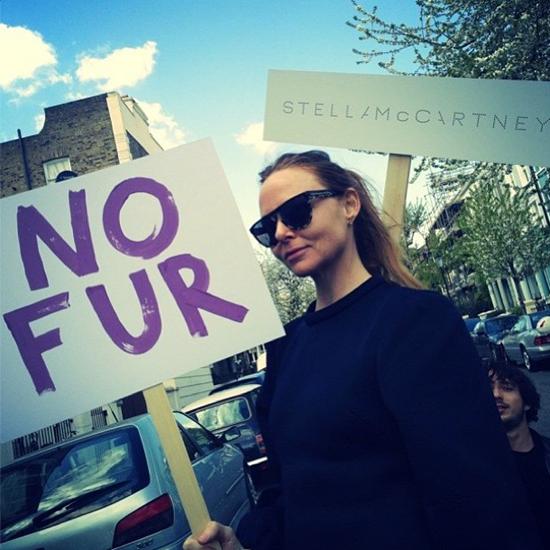 stella-no-fur