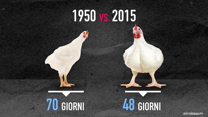 polli a confronto