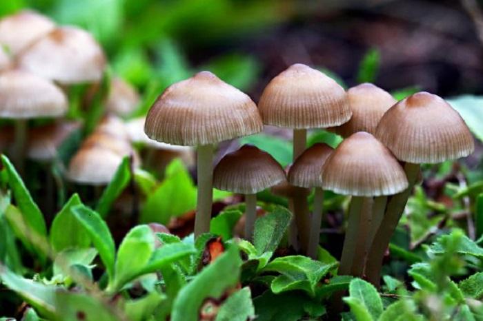 radioattività nei funghi