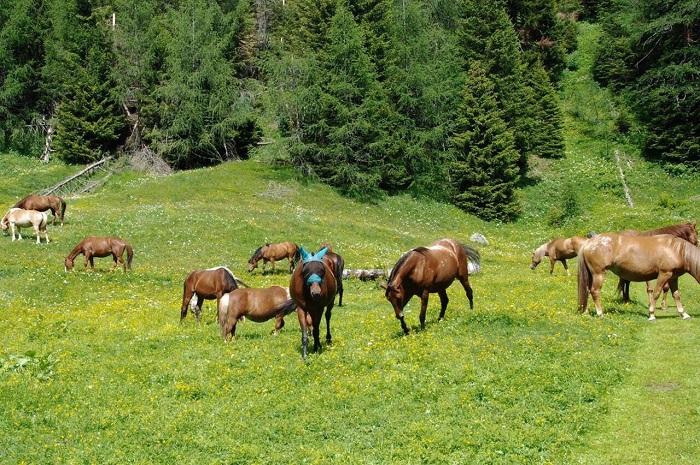cavalli rifugio transumanza