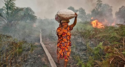 incendi-indonesia-2015
