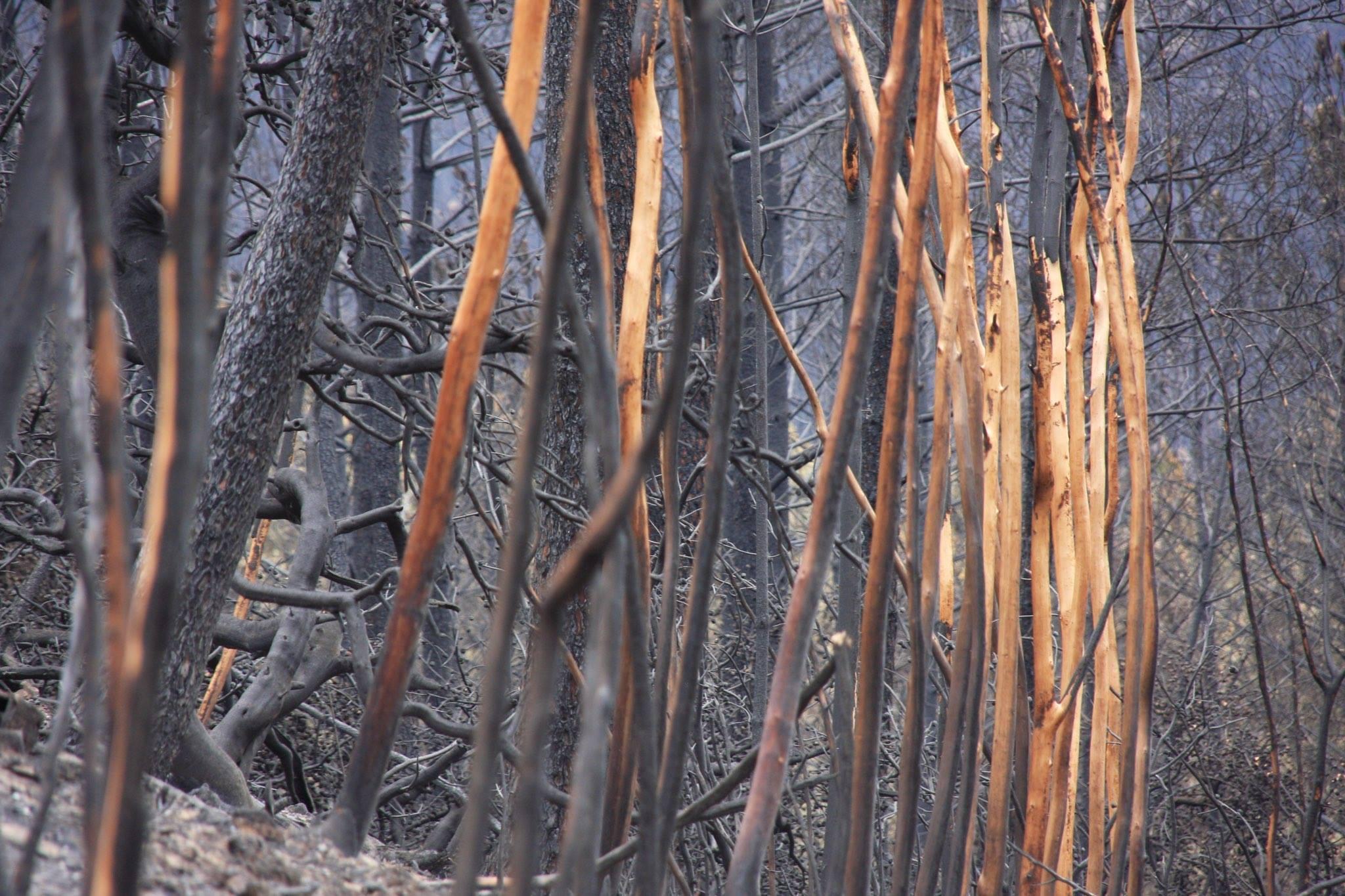 incendio portogallo (10)