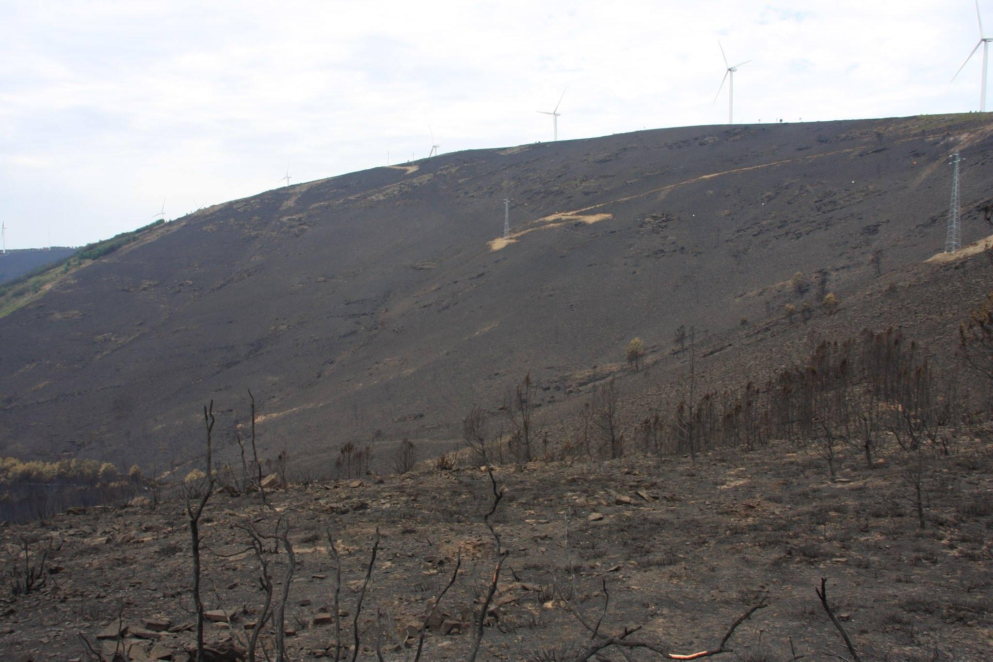 incendio portogallo (3)