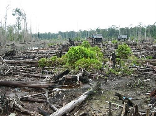 deforestazione illegale foresta pluviale