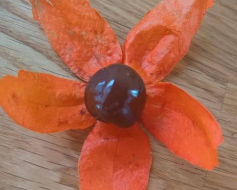 alchechengi cioccolato