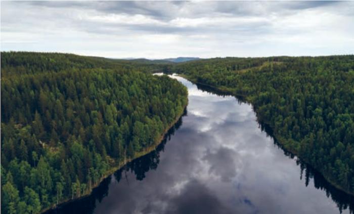 foreste boreali