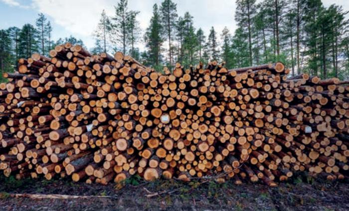 foreste legno