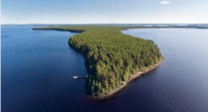 foreste ecosistema