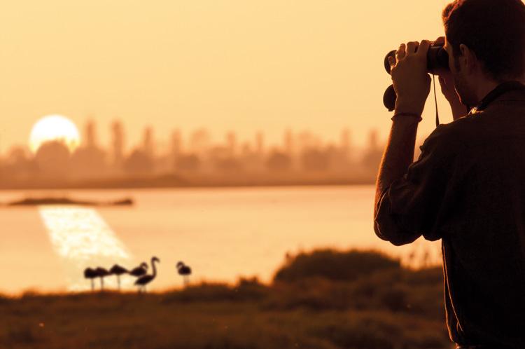 birdwatching_rid