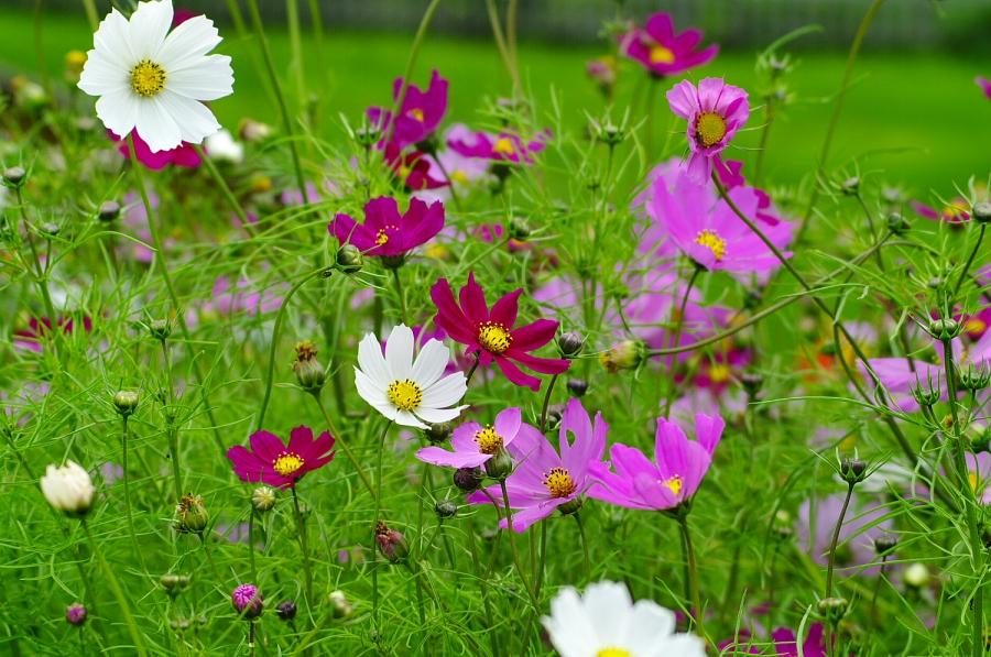 Parco Naturale del Fanes Senes e Braies: fiori alpini