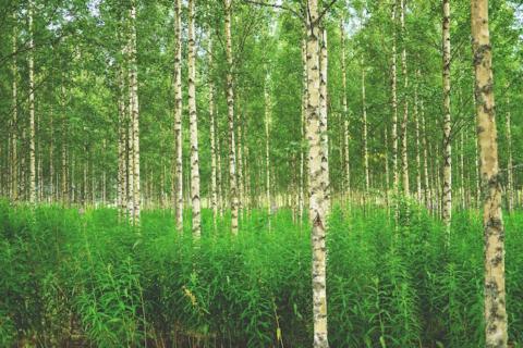 foreste finlandia