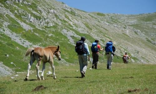 Cammino dei briganti: si può praticare a piedi, in mountain bike o accompagnati dagli asini.