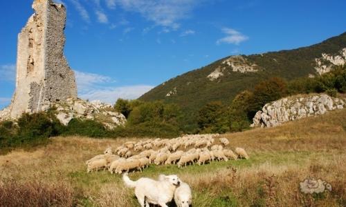 Via della transumanza: il Tratturo Magno parte dalle montagne abruzzesi per giungere sulle pianure della provincia di Foggia.