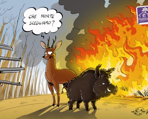 vignetta ehabitat_incendi1
