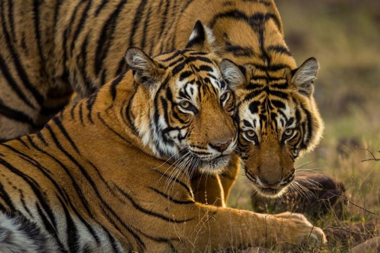 19_Hope_©Sudhir-Shivaram-750x500.jpg