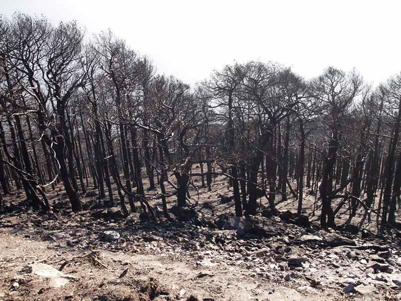 Incendi boschi Valsusa ottobre 2017 (11)