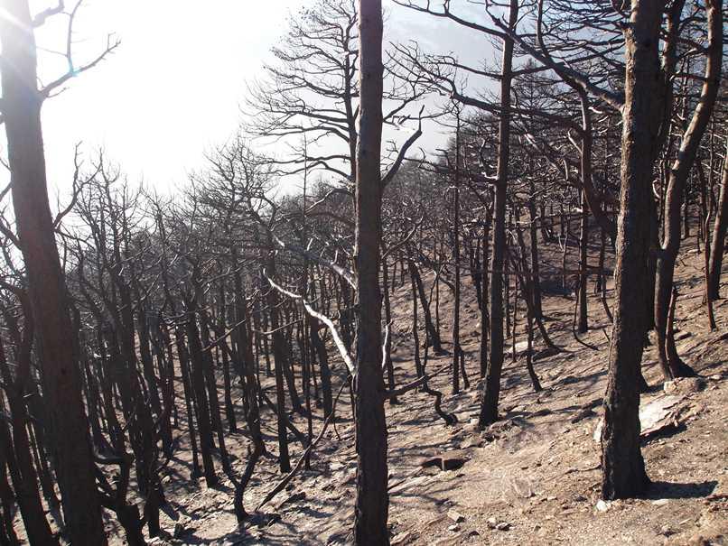 Incendi boschi Valsusa ottobre 2017 (17)