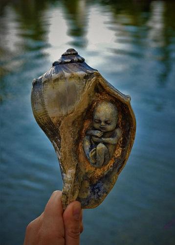 baby conchiglia