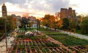 Fattorie urbane: il progetto della Michigan Urban Farming Initiative a Detroit.