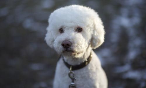 Tartufo: viene cercato con l aiuto di cani addestrati.