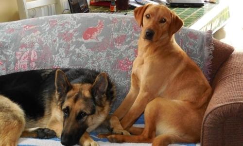 Trusted House Sitters: è la piattaforma ideale per viaggiatori amanti degli animali. Fonte: pagina Facebook Trusted House Sitters.